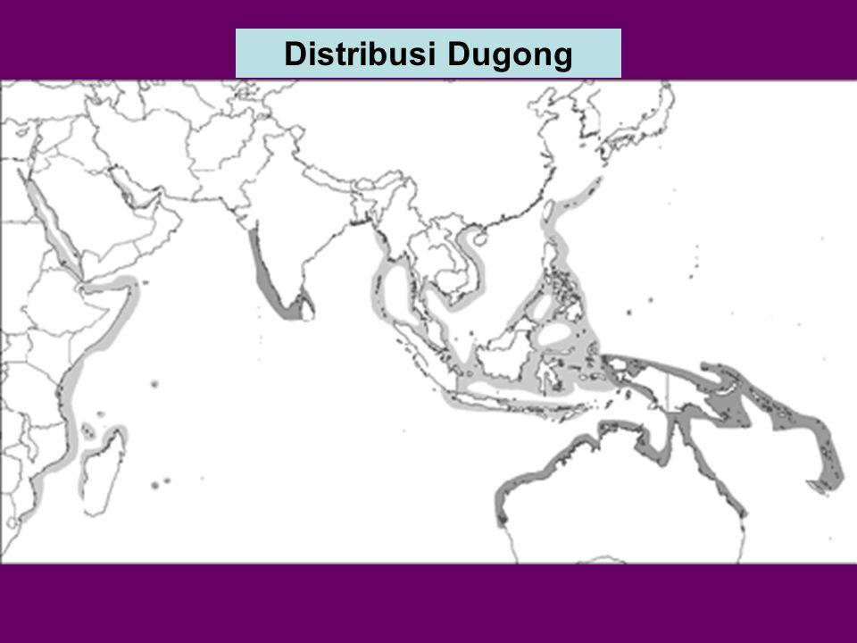 Distribusi Dugong