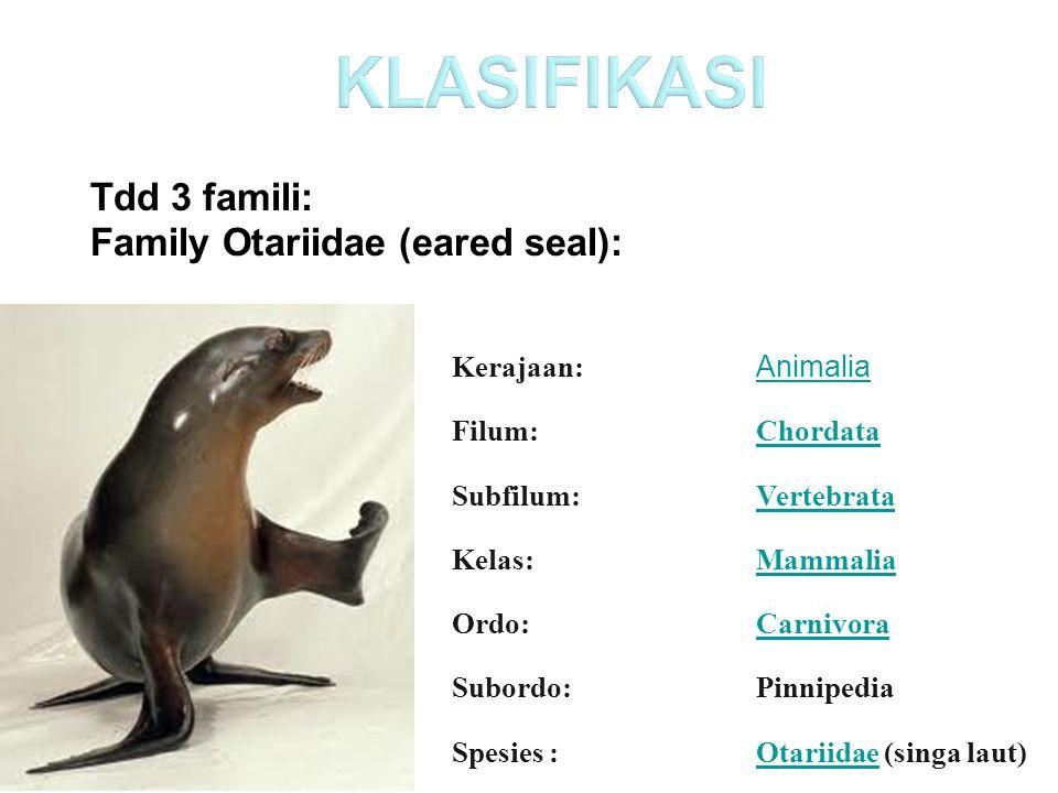 Kerajaan: Animalia Filum:Chordata Subfilum:Vertebrata Kelas:Mammalia Ordo:Carnivora Subordo:Pinnipedia Spesies :OtariidaeOtariidae (singa laut) Tdd 3 famili: Family Otariidae (eared seal):