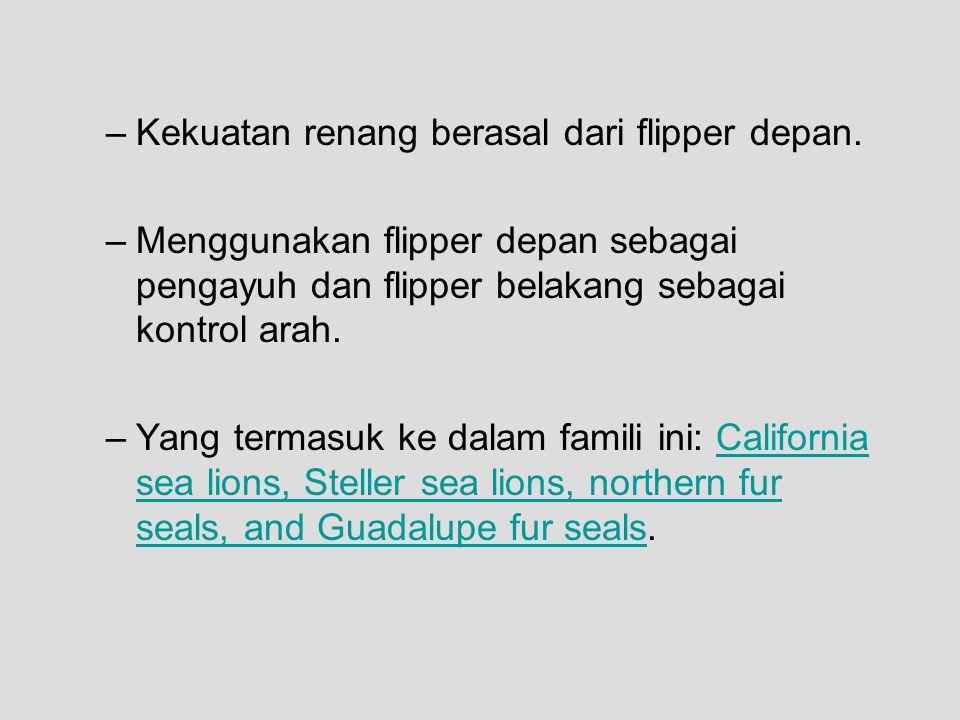 –Kekuatan renang berasal dari flipper depan.