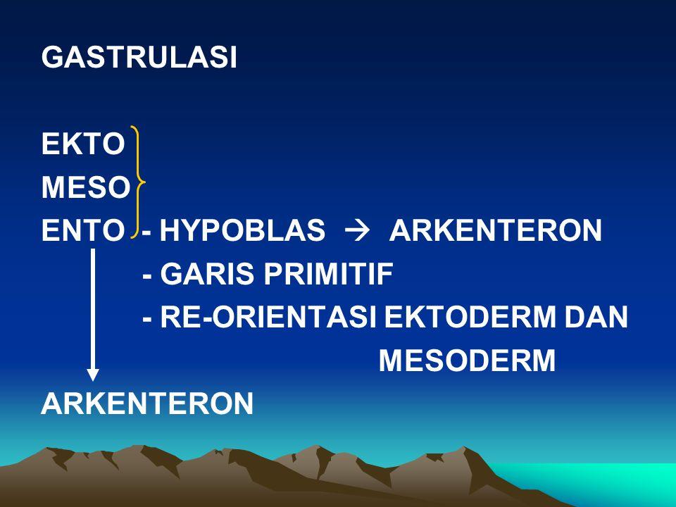 GASTRULASI EKTO MESO ENTO - HYPOBLAS  ARKENTERON - GARIS PRIMITIF - RE-ORIENTASI EKTODERM DAN MESODERM ARKENTERON