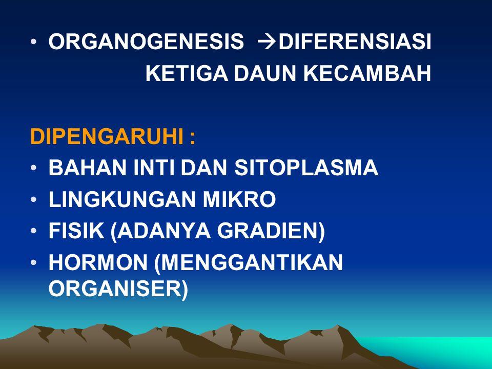 ORGANOGENESIS  DIFERENSIASI KETIGA DAUN KECAMBAH DIPENGARUHI : BAHAN INTI DAN SITOPLASMA LINGKUNGAN MIKRO FISIK (ADANYA GRADIEN) HORMON (MENGGANTIKAN