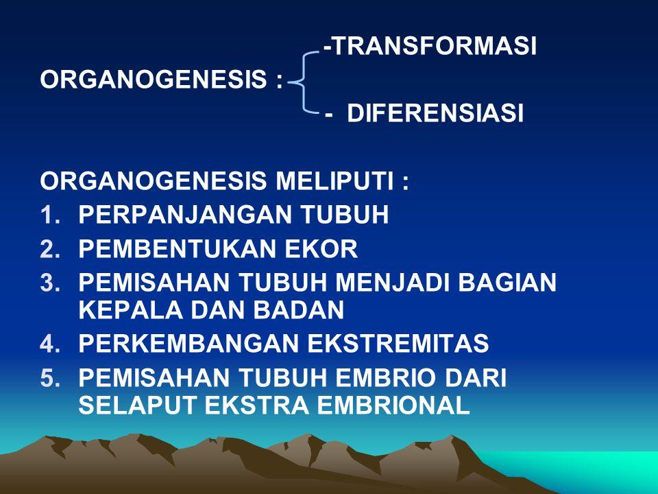 -TRANSFORMASI ORGANOGENESIS : - DIFERENSIASI ORGANOGENESIS MELIPUTI : 1.PERPANJANGAN TUBUH 2.PEMBENTUKAN EKOR 3.PEMISAHAN TUBUH MENJADI BAGIAN KEPALA