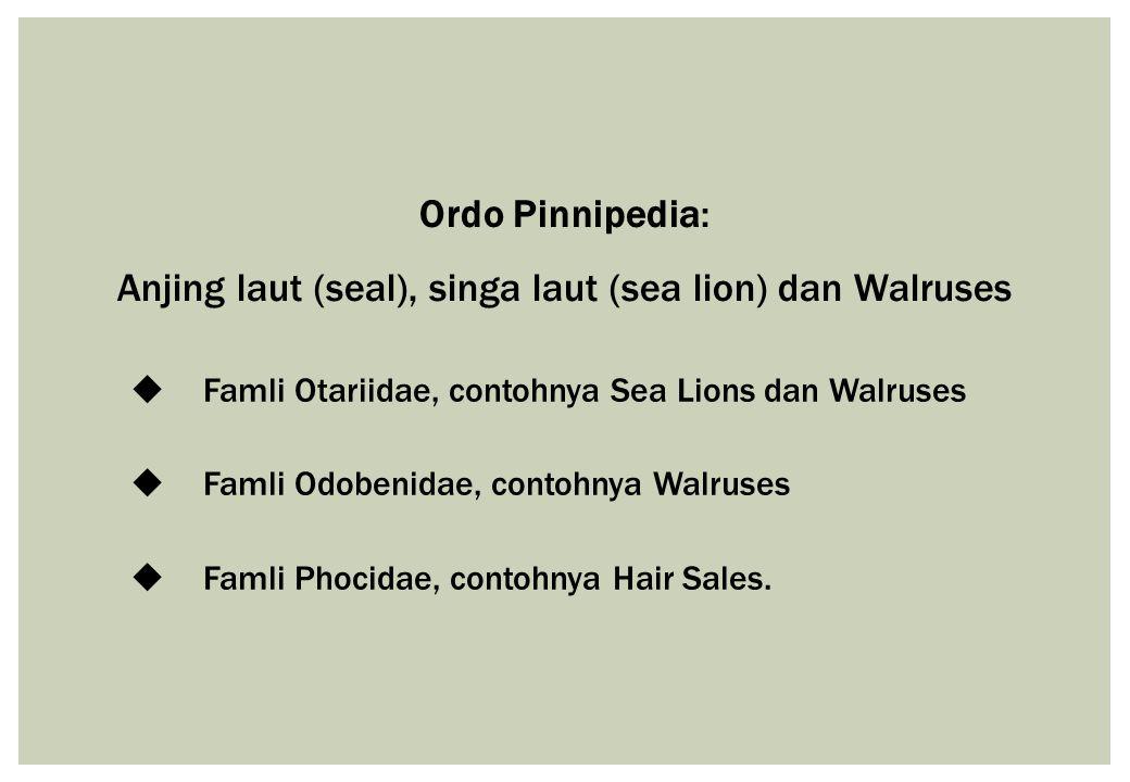 Ordo Pinnipedia: Anjing laut (seal), singa laut (sea lion) dan Walruses  Famli Otariidae, contohnya Sea Lions dan Walruses  Famli Odobenidae, contoh