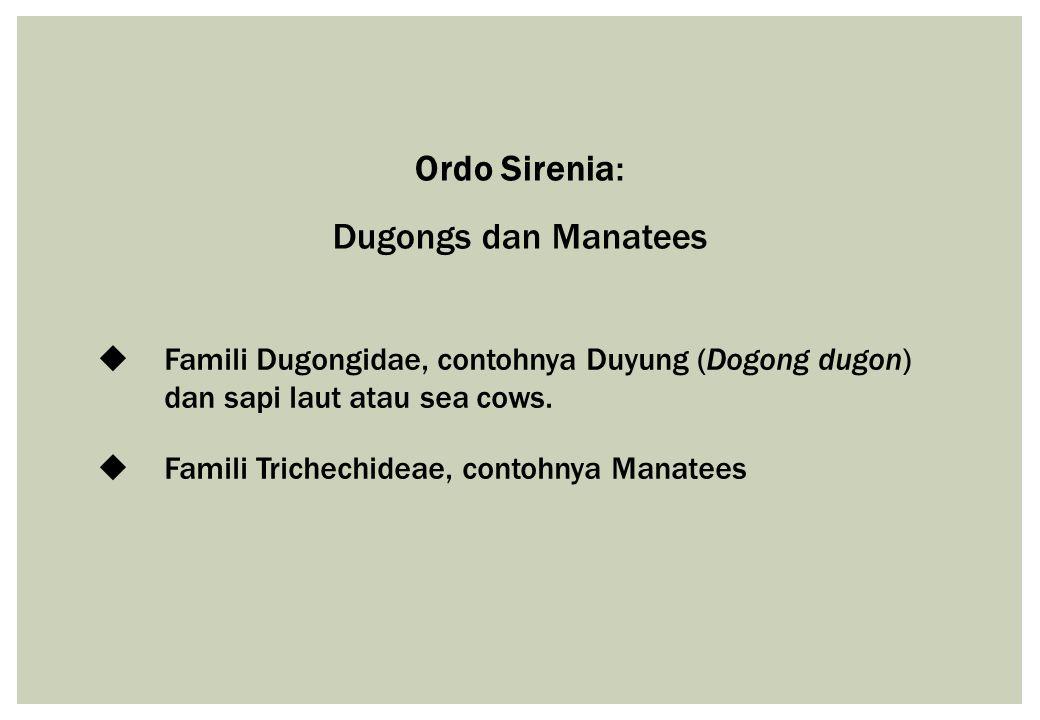 Ordo Sirenia: Dugongs dan Manatees  Famili Dugongidae, contohnya Duyung (Dogong dugon) dan sapi laut atau sea cows.  Famili Trichechideae, contohnya