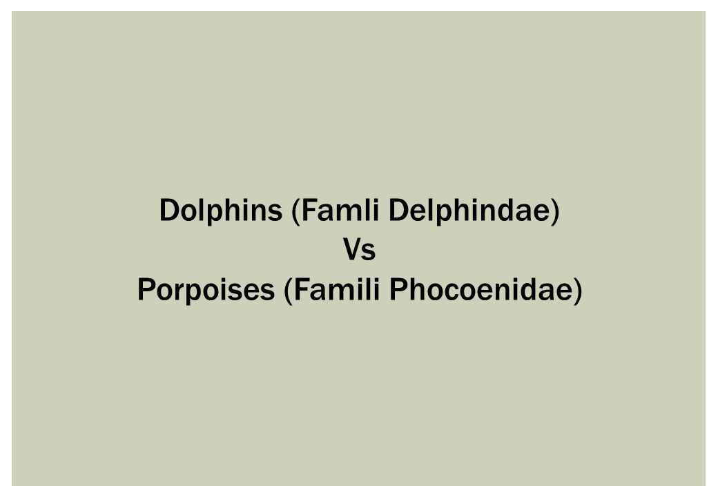 Dolphins (Famli Delphindae) Vs Porpoises (Famili Phocoenidae)