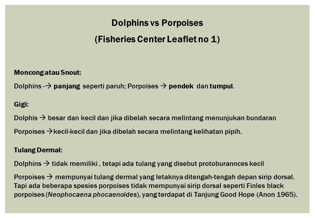 Dolphins vs Porpoises (Fisheries Center Leaflet no 1) Moncong atau Snout: Dolphins -  panjang seperti paruh; Porpoises  pendek dan tumpul. Gigi: Dol