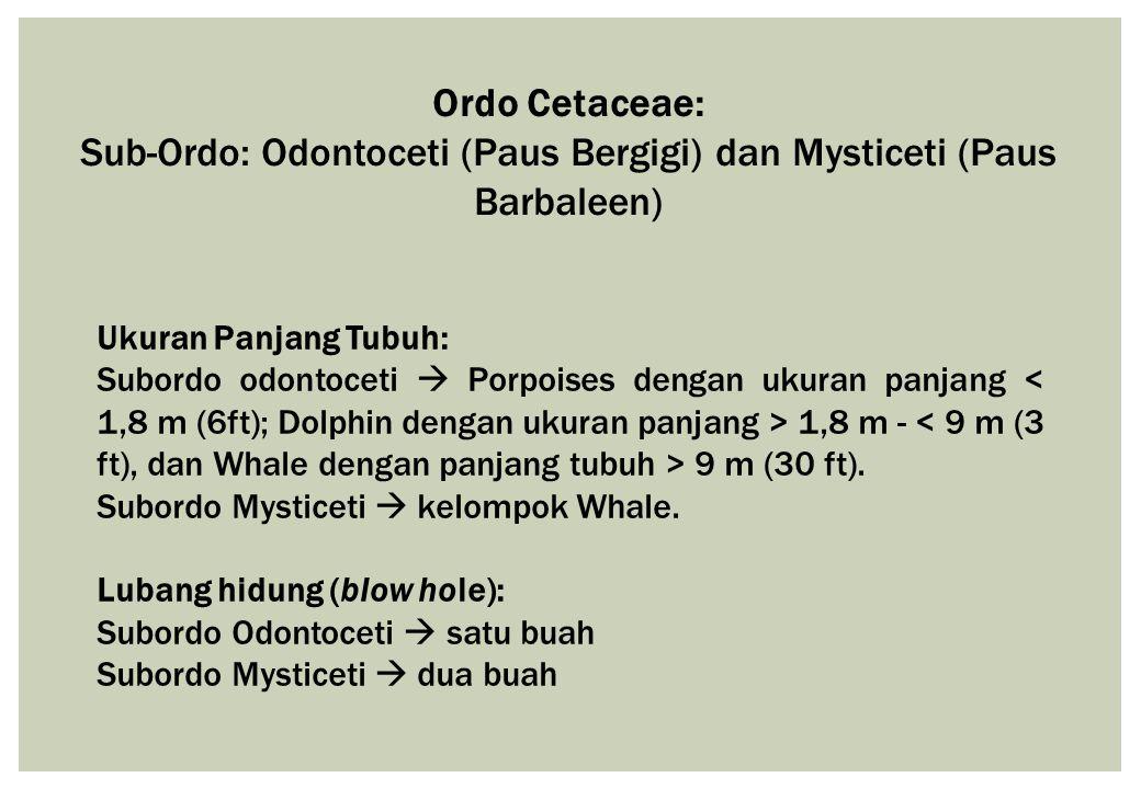 Ordo Cetaceae: Sub-Ordo: Odontoceti (Paus Bergigi) dan Mysticeti (Paus Barbaleen) Ukuran Panjang Tubuh: Subordo odontoceti  Porpoises dengan ukuran p