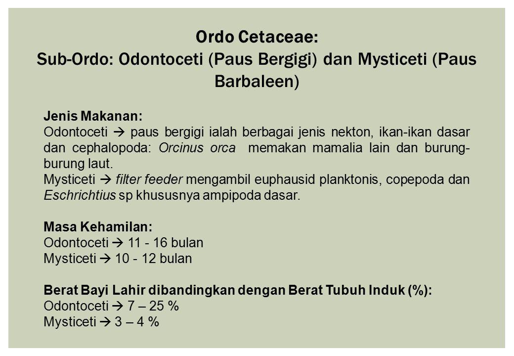 Ordo Cetaceae: Sub-Ordo: Odontoceti (Paus Bergigi) dan Mysticeti (Paus Barbaleen) Jenis Makanan: Odontoceti  paus bergigi ialah berbagai jenis nekton