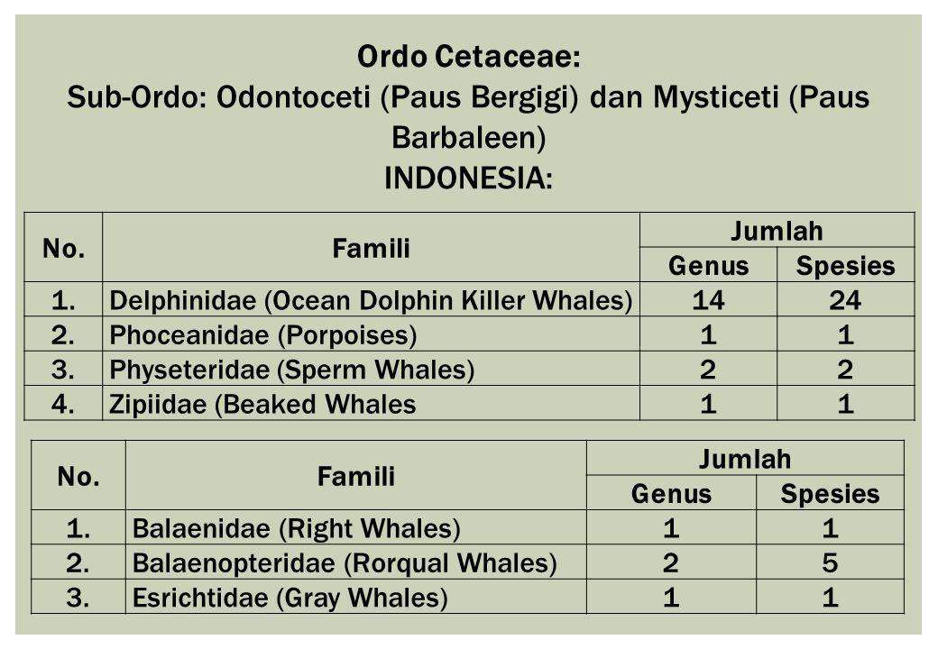 Ordo Cetaceae: Sub-Ordo: Odontoceti (Paus Bergigi) dan Mysticeti (Paus Barbaleen) INDONESIA: No.Famili Jumlah GenusSpesies 1.Delphinidae (Ocean Dolphi