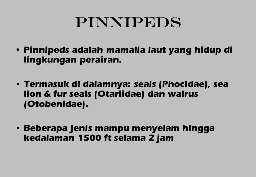 PINNIPEDS Pinnipeds adalah mamalia laut yang hidup di lingkungan perairan. Termasuk di dalamnya: seals (Phocidae), sea lion & fur seals (Otariidae) da