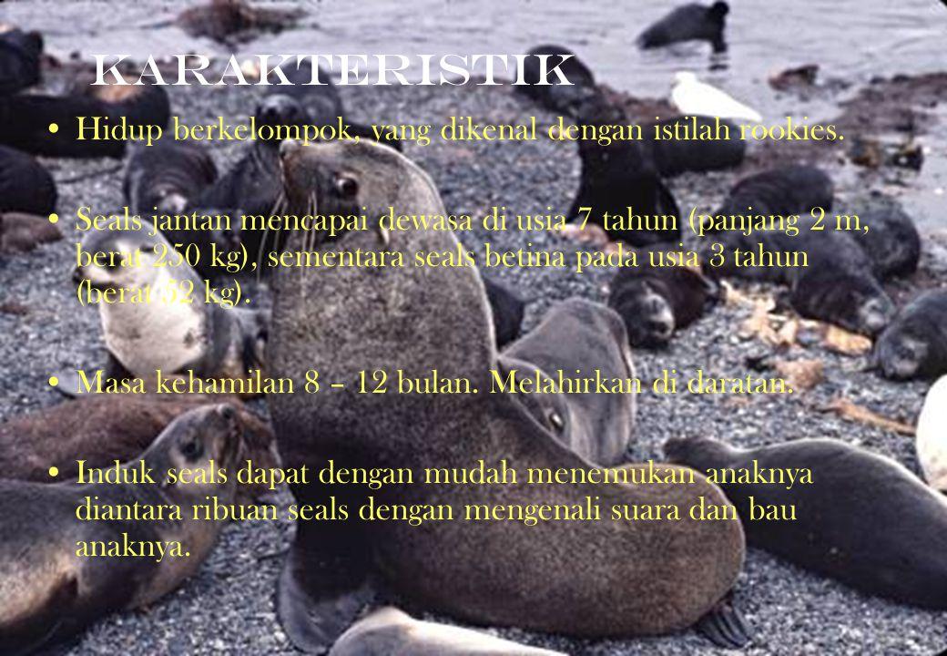 KARAKTERISTIK Hidup berkelompok, yang dikenal dengan istilah rookies. Seals jantan mencapai dewasa di usia 7 tahun (panjang 2 m, berat 250 kg), sement