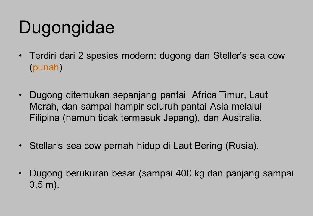 Terdiri dari 2 spesies modern: dugong dan Steller's sea cow (punah) Dugong ditemukan sepanjang pantai Africa Timur, Laut Merah, dan sampai hampir selu