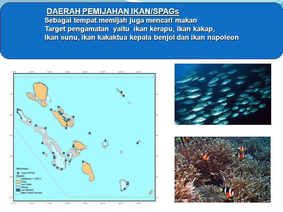 DAERAH PEMIJAHAN IKAN/SPAGs Sebagai tempat memijah juga mencari makan Target pengamatan yaitu ikan kerapu, ikan kakap, Ikan sunu, ikan kakaktua kepala benjol dan ikan napoleon