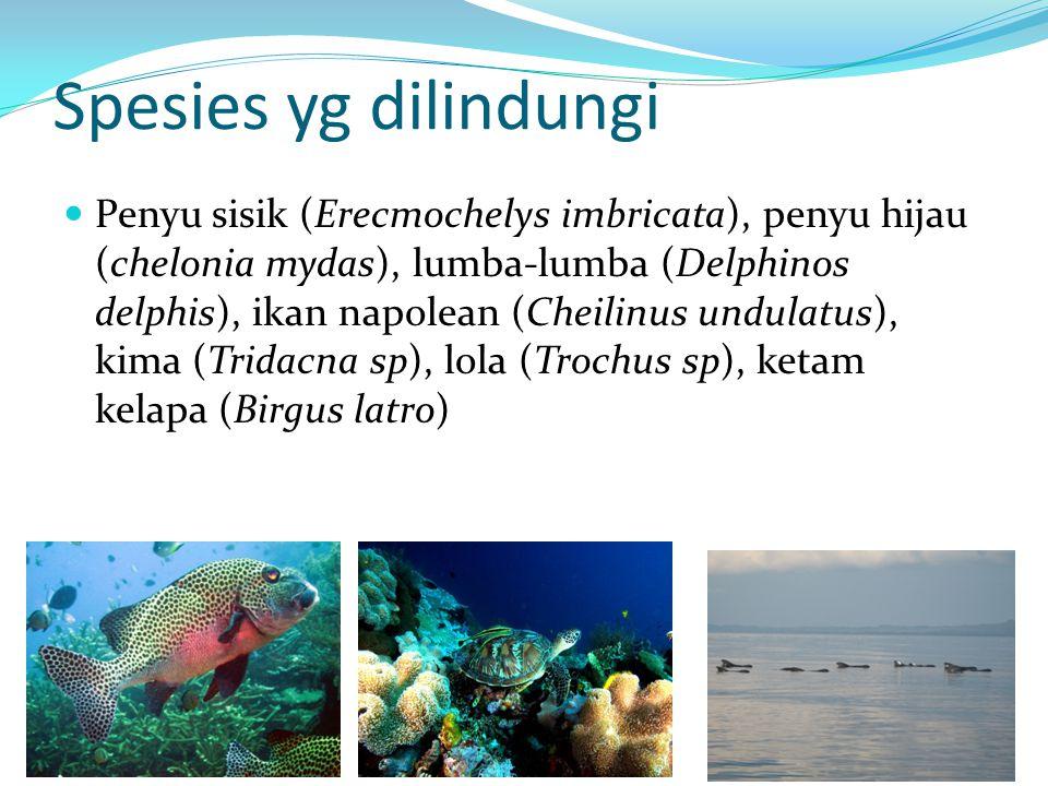 Spesies yg dilindungi Penyu sisik (Erecmochelys imbricata), penyu hijau (chelonia mydas), lumba-lumba (Delphinos delphis), ikan napolean (Cheilinus undulatus), kima (Tridacna sp), lola (Trochus sp), ketam kelapa (Birgus latro)