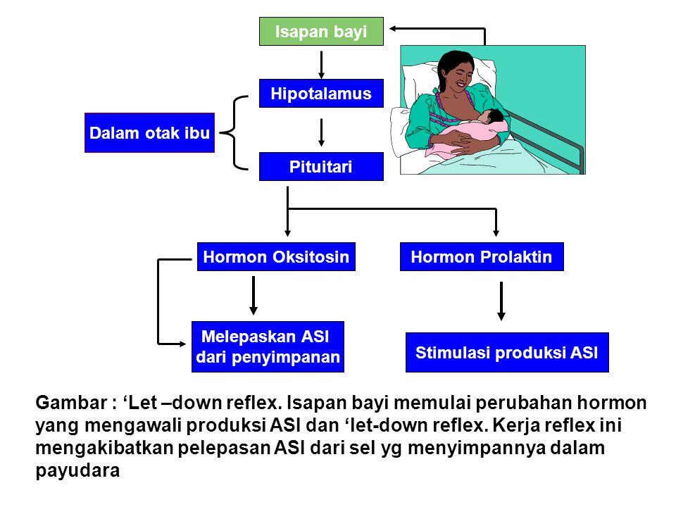 Gambar : 'Let –down reflex. Isapan bayi memulai perubahan hormon yang mengawali produksi ASI dan 'let-down reflex. Kerja reflex ini mengakibatkan pele