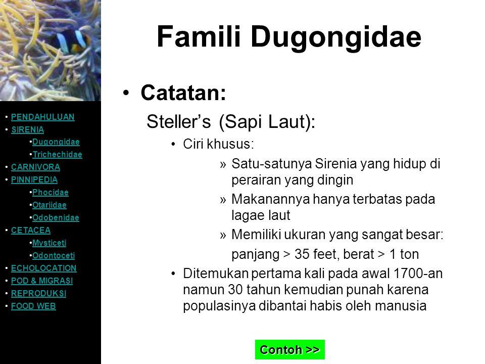 Famili Dugongidae Catatan: Steller's (Sapi Laut): Ciri khusus: »Satu-satunya Sirenia yang hidup di perairan yang dingin »Makanannya hanya terbatas pad