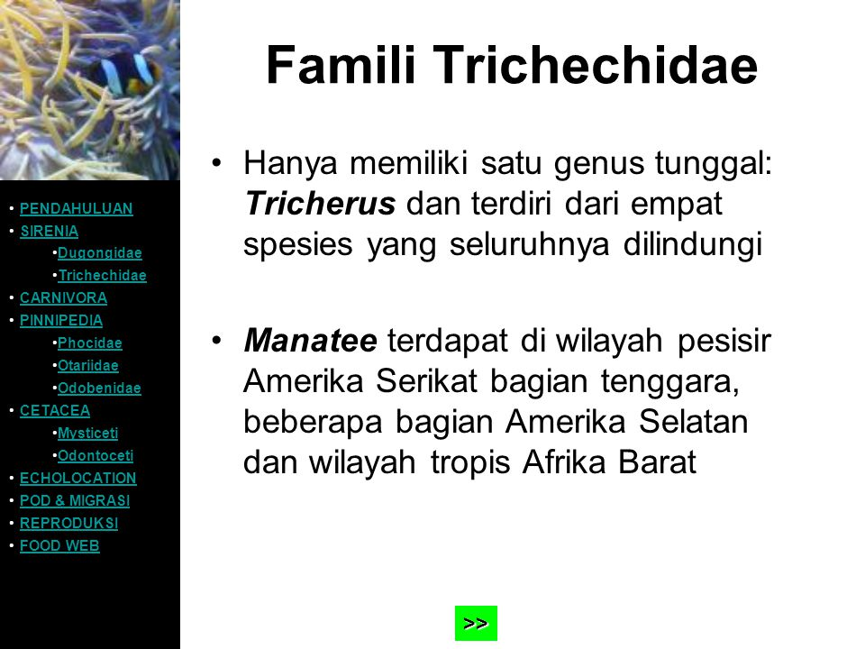 Famili Trichechidae Hanya memiliki satu genus tunggal: Tricherus dan terdiri dari empat spesies yang seluruhnya dilindungi Manatee terdapat di wilayah