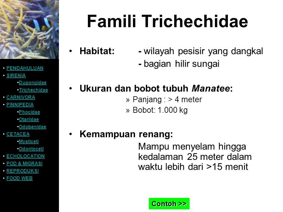 Famili Trichechidae Habitat:- wilayah pesisir yang dangkal - bagian hilir sungai Ukuran dan bobot tubuh Manatee: »Panjang : > 4 meter »Bobot: 1.000 kg