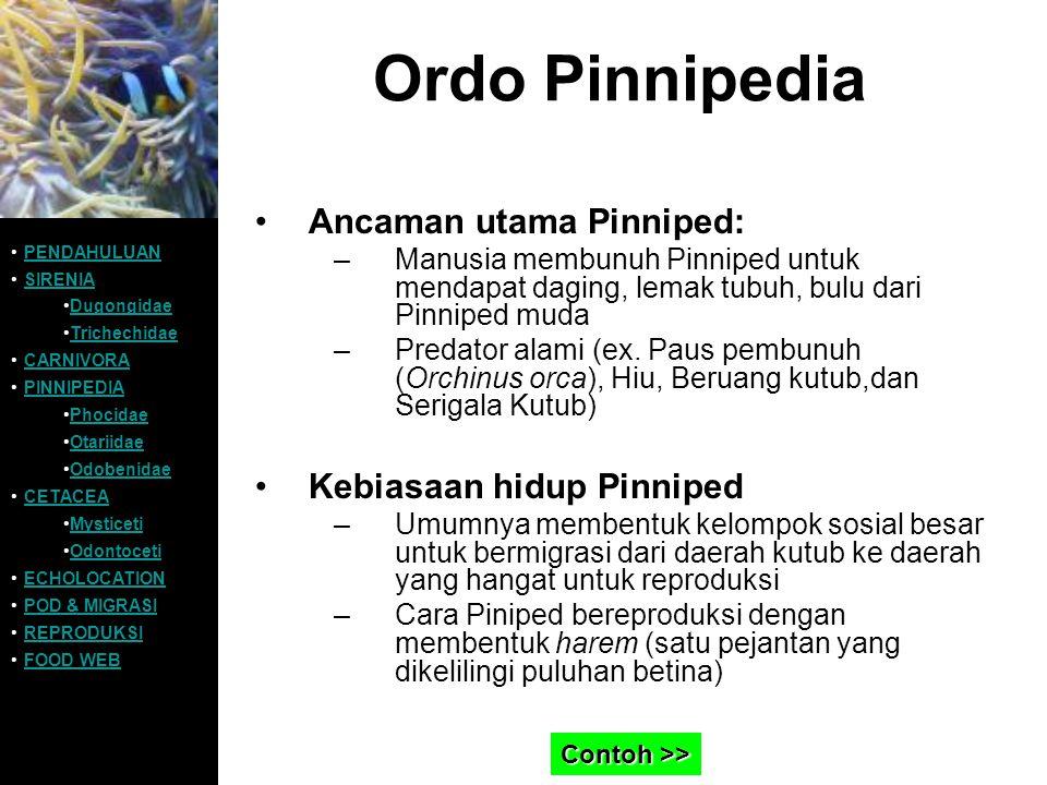 Ordo Pinnipedia Ancaman utama Pinniped: –Manusia membunuh Pinniped untuk mendapat daging, lemak tubuh, bulu dari Pinniped muda –Predator alami (ex. Pa