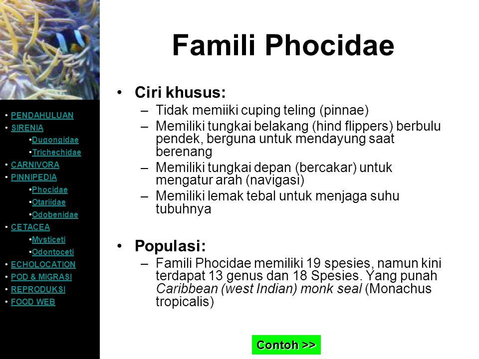Famili Phocidae Ciri khusus: –Tidak memiiki cuping teling (pinnae) –Memiliki tungkai belakang (hind flippers) berbulu pendek, berguna untuk mendayung