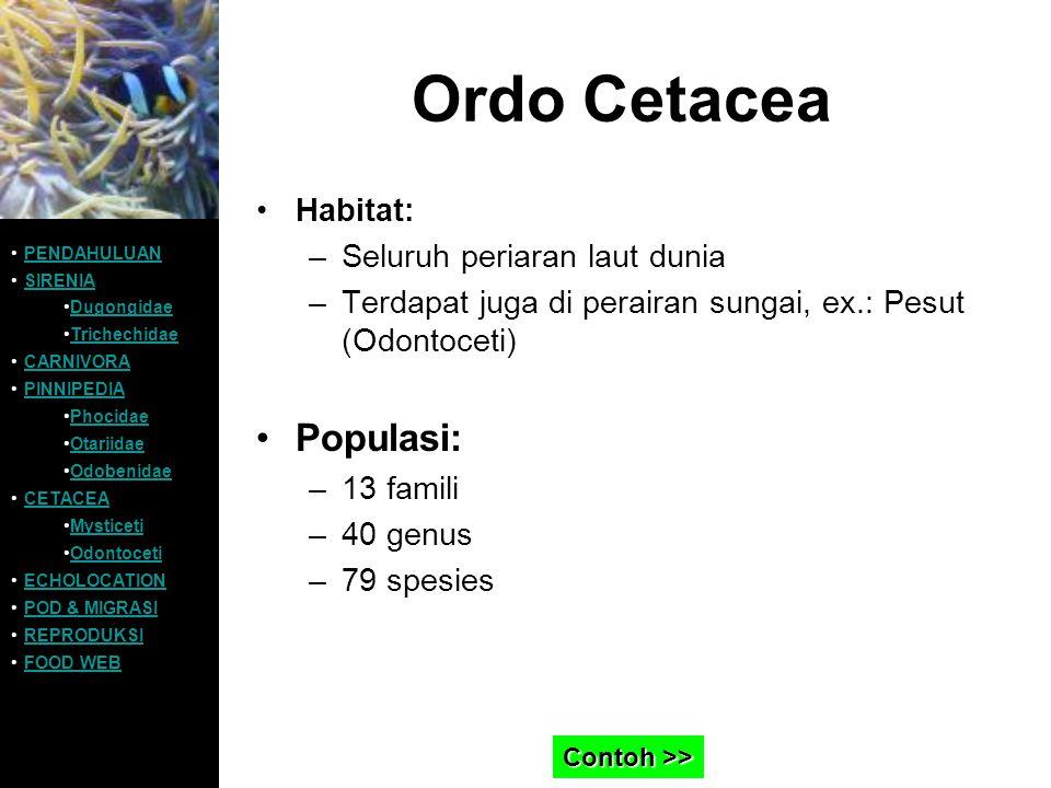 Ordo Cetacea Habitat: –Seluruh periaran laut dunia –Terdapat juga di perairan sungai, ex.: Pesut (Odontoceti) Populasi: –13 famili –40 genus –79 spesi