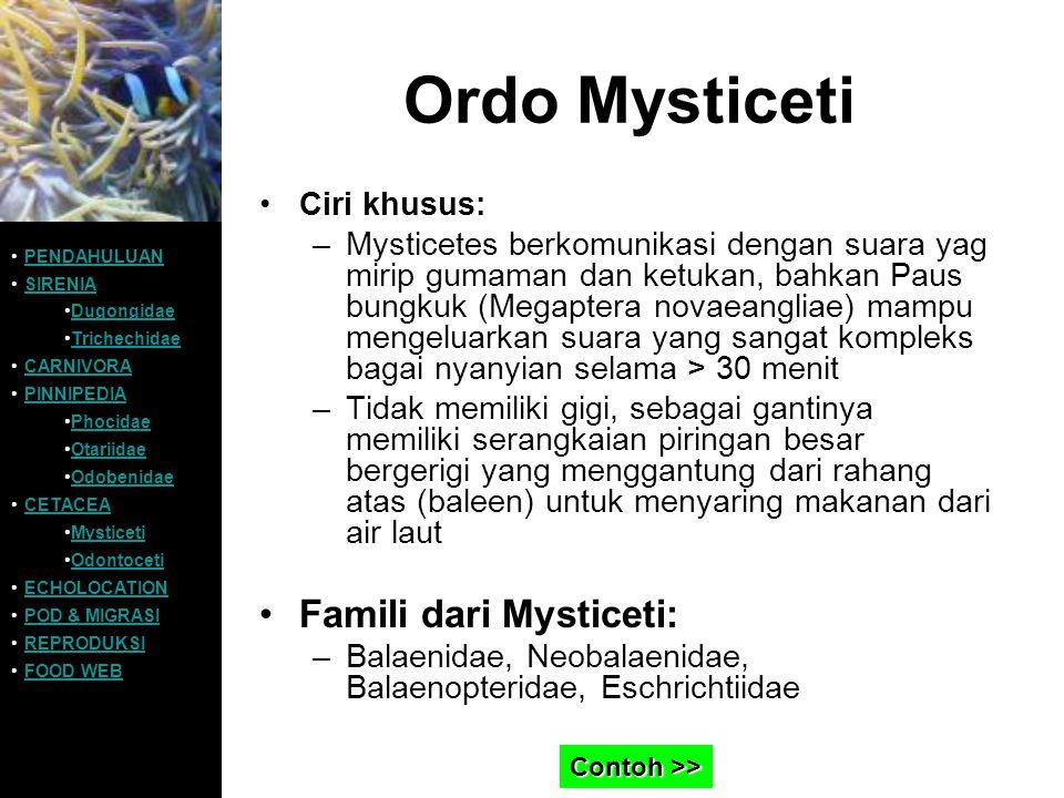 Ordo Mysticeti Ciri khusus: –Mysticetes berkomunikasi dengan suara yag mirip gumaman dan ketukan, bahkan Paus bungkuk (Megaptera novaeangliae) mampu m