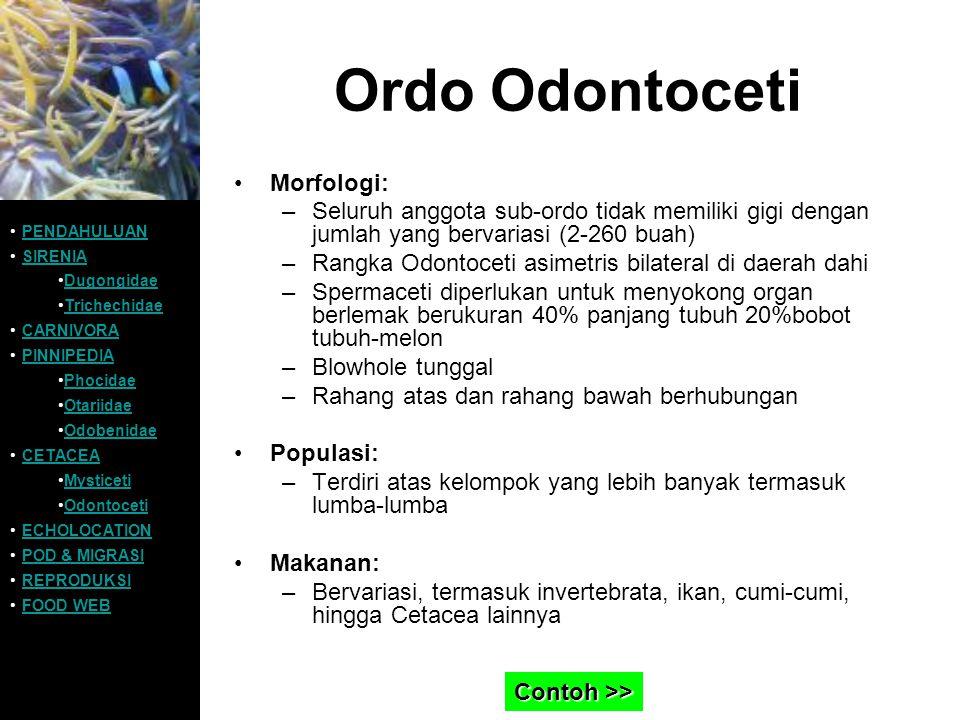 Ordo Odontoceti Morfologi: –Seluruh anggota sub-ordo tidak memiliki gigi dengan jumlah yang bervariasi (2-260 buah) –Rangka Odontoceti asimetris bilat