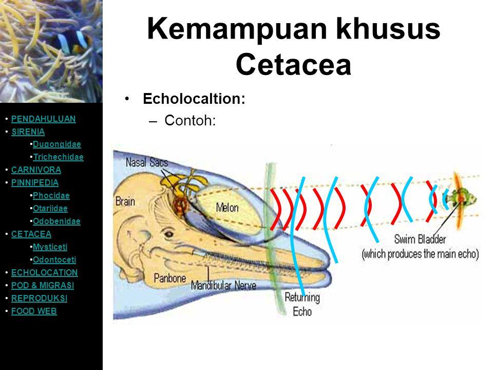 Kemampuan khusus Cetacea Echolocaltion: –Contoh: PENDAHULUAN SIRENIA Dugongidae Trichechidae CARNIVORA PINNIPEDIA Phocidae Otariidae Odobenidae CETACE