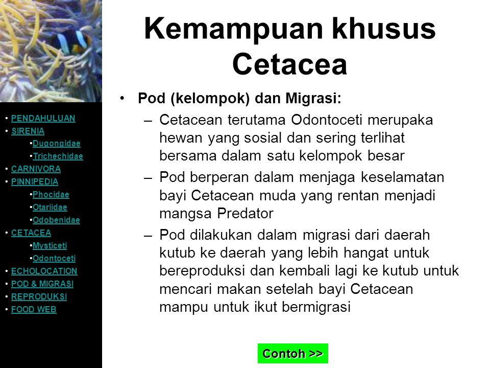 Kemampuan khusus Cetacea Pod (kelompok) dan Migrasi: –Cetacean terutama Odontoceti merupaka hewan yang sosial dan sering terlihat bersama dalam satu k