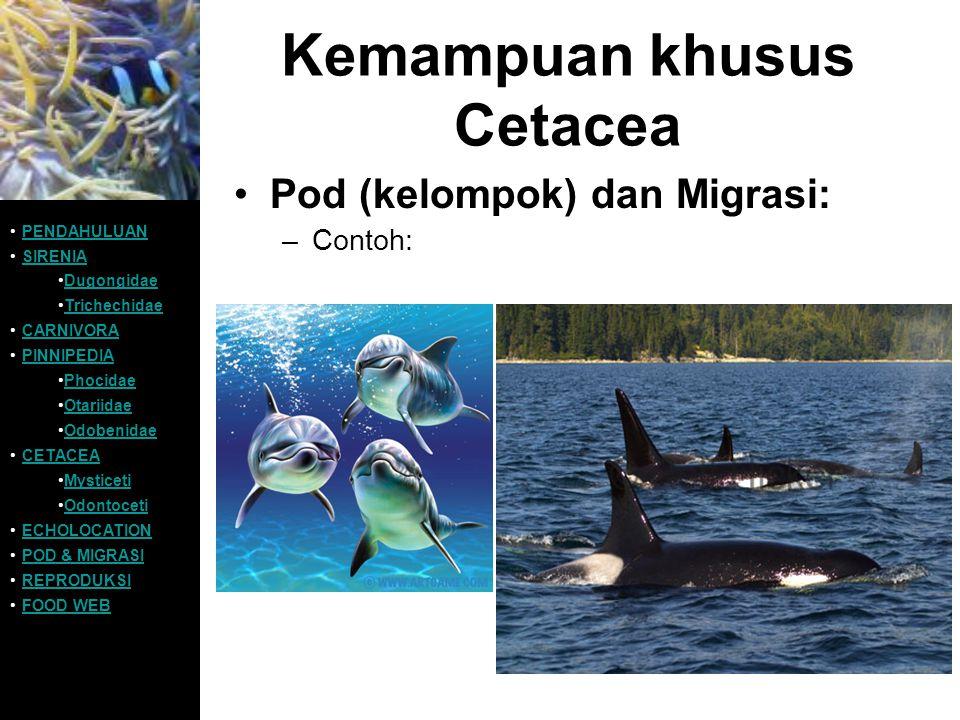 Kemampuan khusus Cetacea Pod (kelompok) dan Migrasi: –Contoh: PENDAHULUAN SIRENIA Dugongidae Trichechidae CARNIVORA PINNIPEDIA Phocidae Otariidae Odob