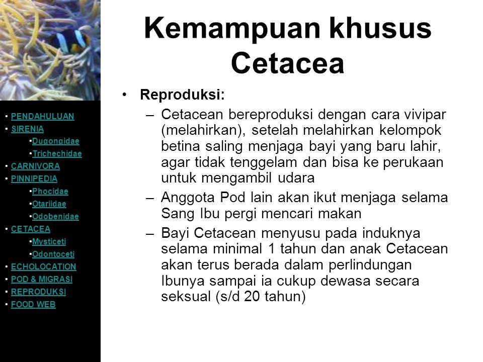 Kemampuan khusus Cetacea Reproduksi: –Cetacean bereproduksi dengan cara vivipar (melahirkan), setelah melahirkan kelompok betina saling menjaga bayi y