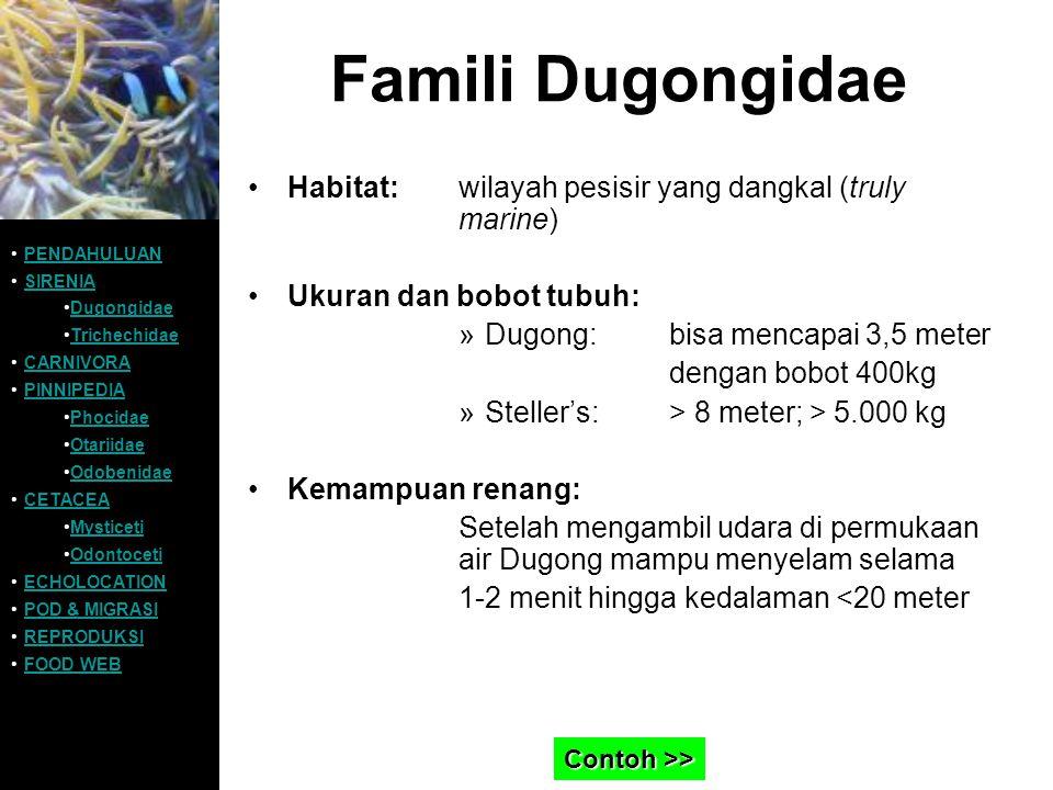 Famili Dugongidae Contoh Dugong dugon: PENDAHULUAN SIRENIA Dugongidae Trichechidae CARNIVORA PINNIPEDIA Phocidae Otariidae Odobenidae CETACEA Mysticeti Odontoceti ECHOLOCATION POD & MIGRASI REPRODUKSI FOOD WEB >>