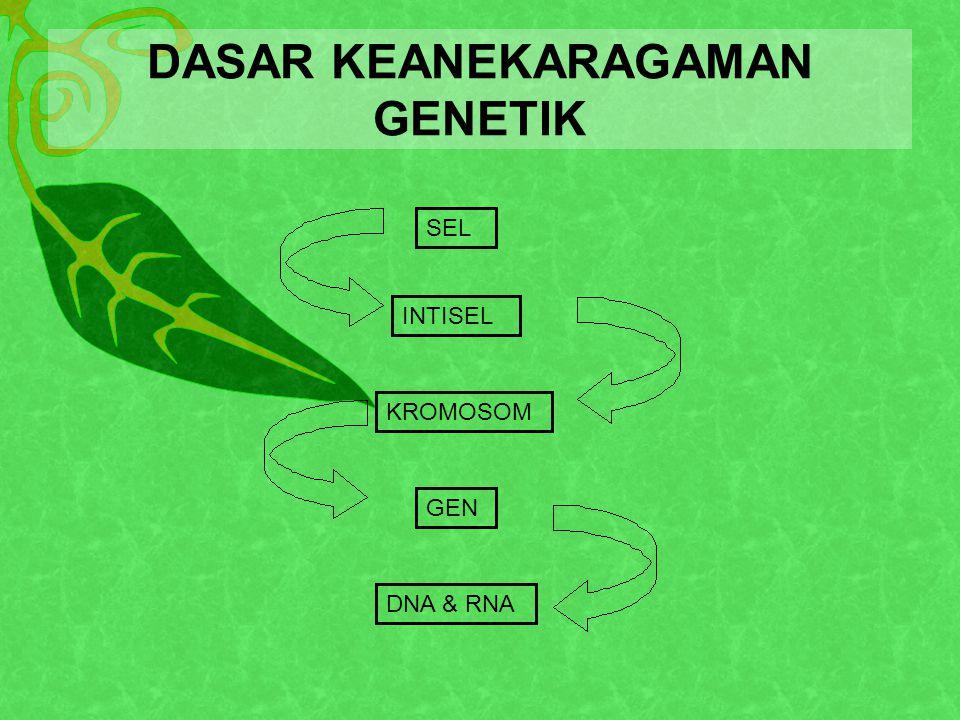 DASAR KEANEKARAGAMAN GENETIK SEL INTISEL KROMOSOM GEN DNA & RNA