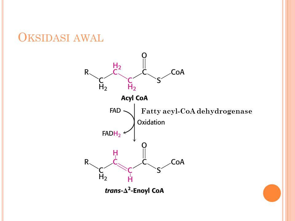 O KSIDASI AWAL Fatty acyl-CoA dehydrogenase