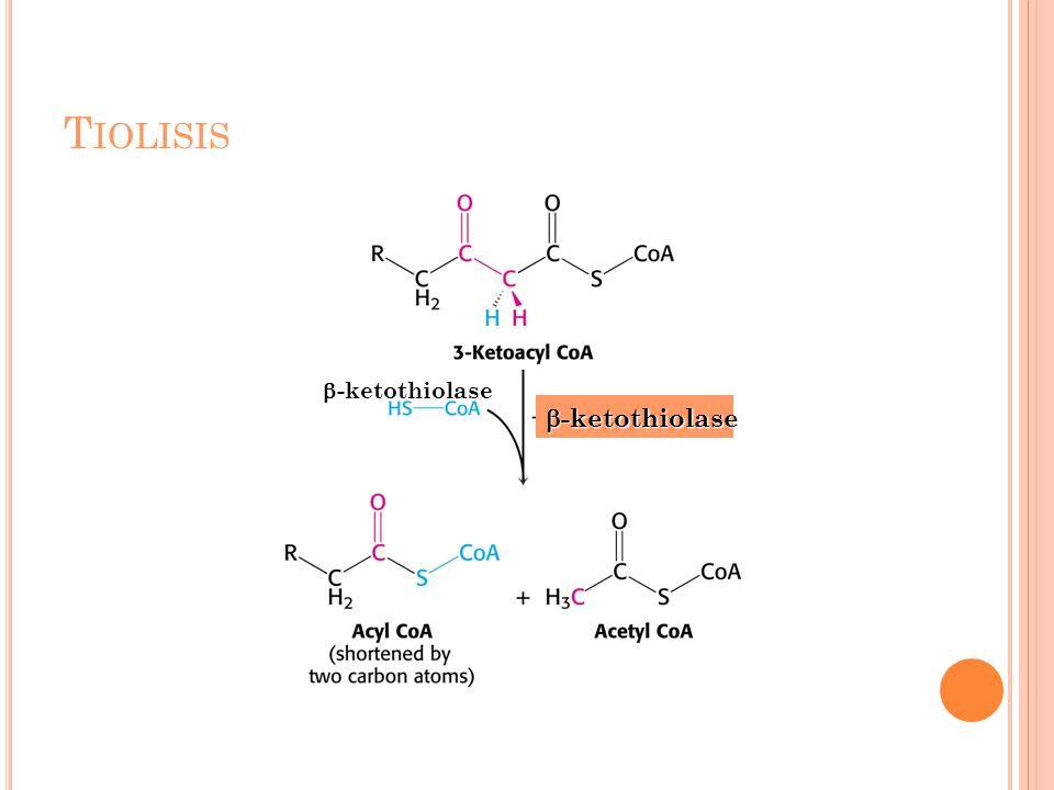 T IOLISIS  -ketothiolase