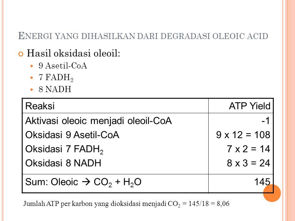 E NERGI YANG DIHASILKAN DARI DEGRADASI OLEOIC ACID Hasil oksidasi oleoil: 9 Asetil-CoA 7 FADH 2 8 NADH ReaksiATP Yield Aktivasi oleoic menjadi oleoil-