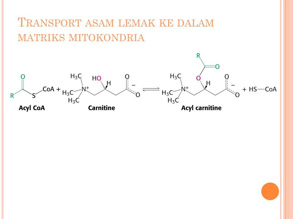 E NERGI YANG DIHASILKAN DARI DEGRADASI LINOLEIC ACID Hasil oksidasi oleoil: 9 Asetil-CoA 8 FADH 2 8 NADH ReaksiATP Yield Aktivasi linoleic menjadi linoleil-CoA Oksidasi 9 Asetil-CoA Oksidasi 7 FADH 2 Oksidasi 7 NADH 9 x 12 = 108 7 x 2 = 14 7 x 3 = 21 Sum: linoleic  CO 2 + H 2 O142 Jumlah ATP per karbon yang dioksidasi menjadi CO 2 = 142/18 = 7.89