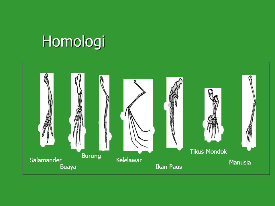 Homologi Salamander Buaya Kelelawar Ikan Paus Tikus Mondok Manusia Burung