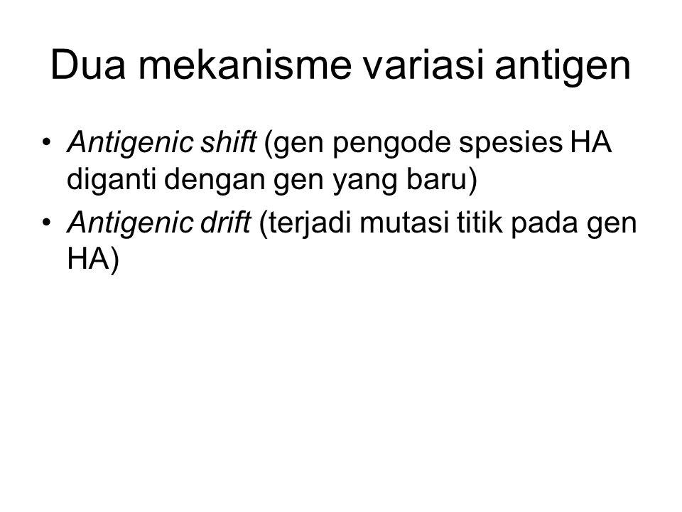 Dua mekanisme variasi antigen Antigenic shift (gen pengode spesies HA diganti dengan gen yang baru) Antigenic drift (terjadi mutasi titik pada gen HA)