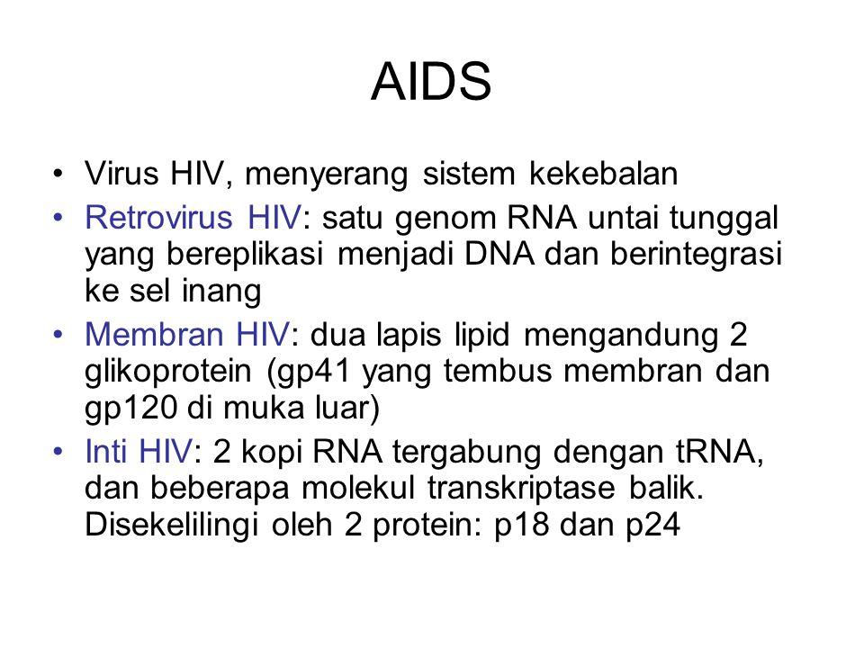 AIDS Virus HIV, menyerang sistem kekebalan Retrovirus HIV: satu genom RNA untai tunggal yang bereplikasi menjadi DNA dan berintegrasi ke sel inang Mem