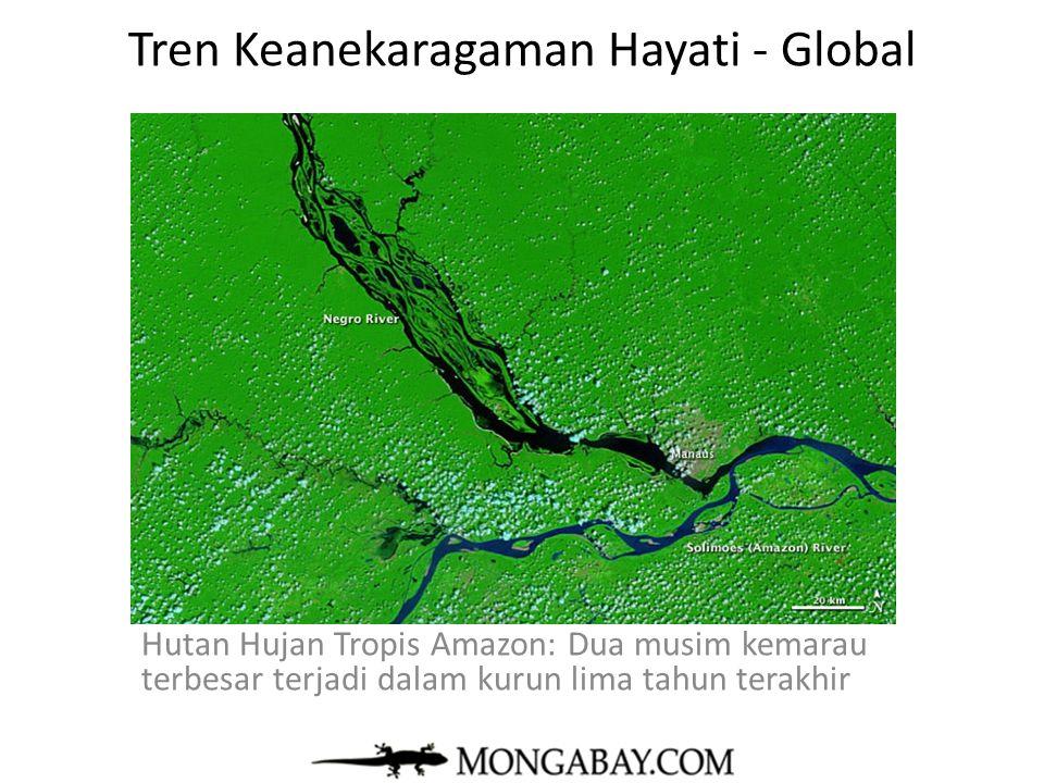 Tren Keanekaragaman Hayati - Global Hutan Hujan Tropis Amazon: Dua musim kemarau terbesar terjadi dalam kurun lima tahun terakhir mongabay.com