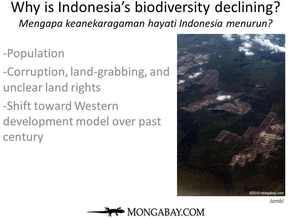 Why is Indonesia's biodiversity declining? Mengapa keanekaragaman hayati Indonesia menurun? -Population -Corruption, land-grabbing, and unclear land r