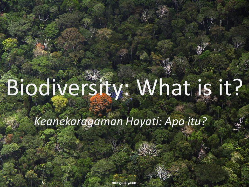 New markets / Pasar Baru -REDD + -Lain-pembayaran untuk jasa ekosistem (air, pengendalian erosi, penyerbukan, keanekaragaman hayati) -Kepemimpinan peluang bagi Indonesia -Ekosistem Indonesia telah banyak karbon dan keanekaragaman hayati mongabay.com North Sulawesi