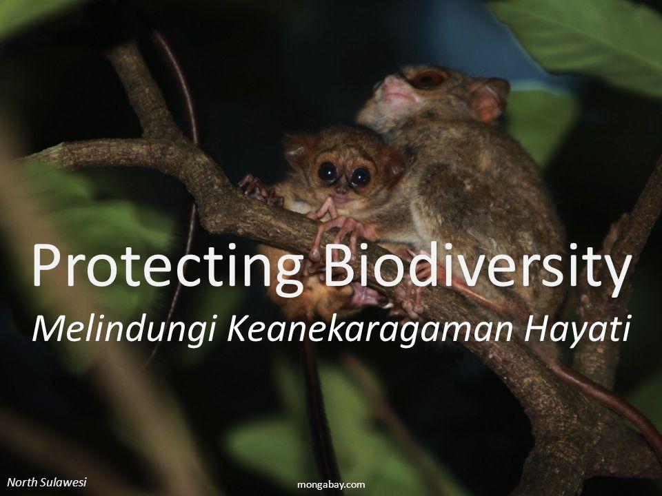 Biodiversity Protecting Biodiversity Melindungi Keanekaragaman Hayati North Sulawesi