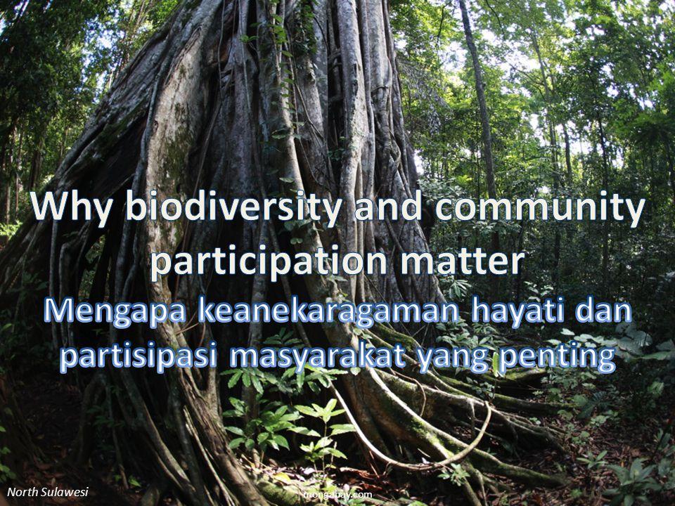 mongabay.com North Sulawesi
