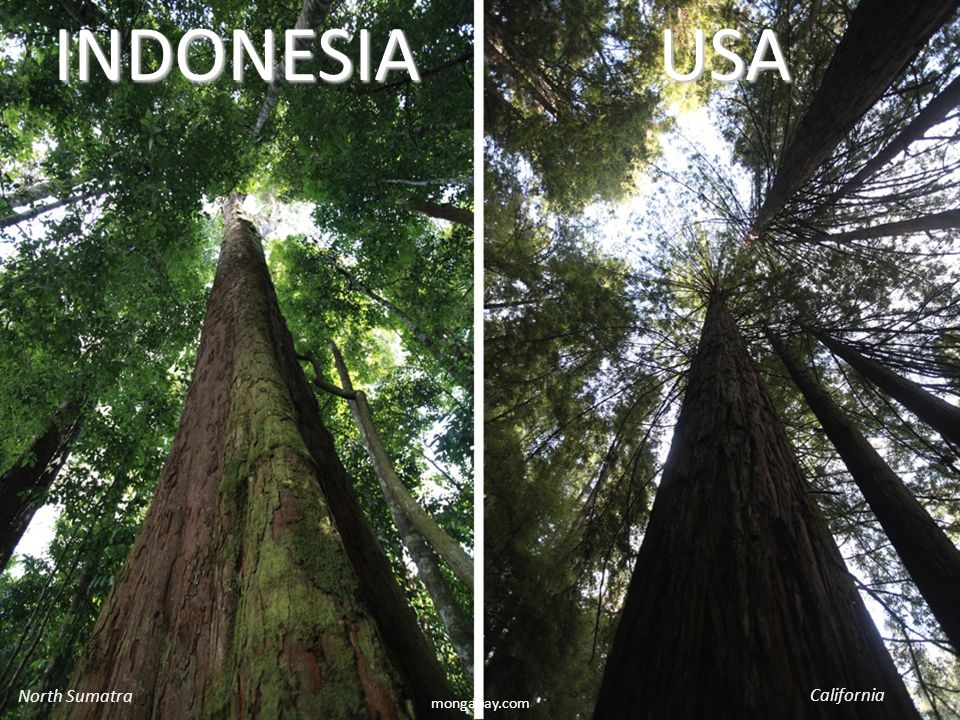 mongabay.comINDONESIAUSA North Sumatra California