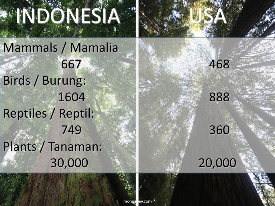mongabay.comINDONESIAUSA Mammals / Mamalia 667468 667468 Birds / Burung: 1604888 Reptiles / Reptil: 749360 749360 Plants / Tanaman: 30,000 20,000 30,0