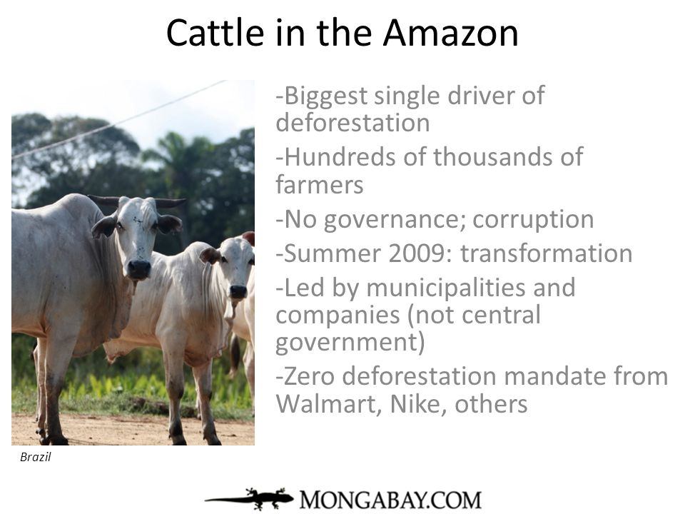 Cattle in the Amazon -Biggest single driver of deforestation -Hundreds of thousands of farmers -No governance; corruption -Summer 2009: transformation