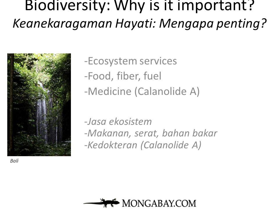 Biodiversity: Why is it important? Keanekaragaman Hayati: Mengapa penting? -Ecosystem services -Food, fiber, fuel -Medicine (Calanolide A) -Jasa ekosi