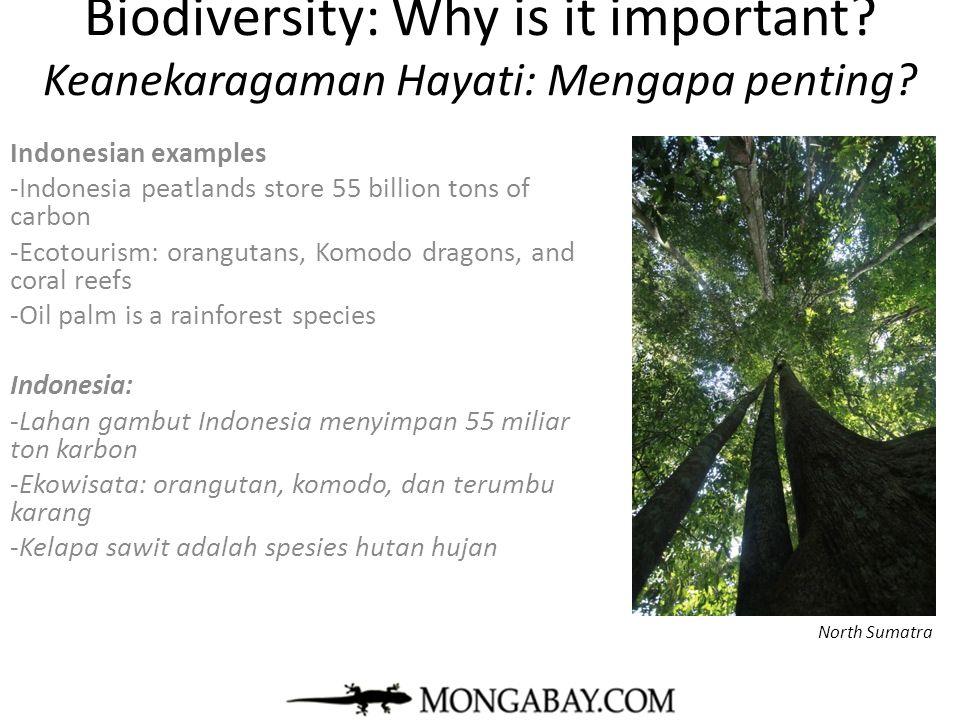 mongabay.com Trends in Biodiversity Tren Keanekaragaman Hayati Central Kalimantan
